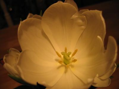 zoe-flower.jpg